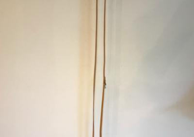 Hondenlijn Ludo - Volledige lengte 250 cm